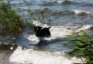 hunde-baden