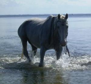 pferd-baden