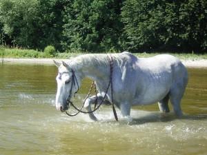 pferdebaden