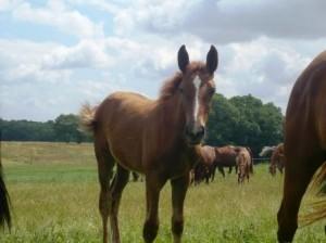 Die Pferdehalter Rechtsschutzversicherung