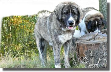 die Haftpflichtversicherung für Hunde
